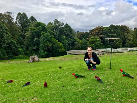 Lorikeets and me.